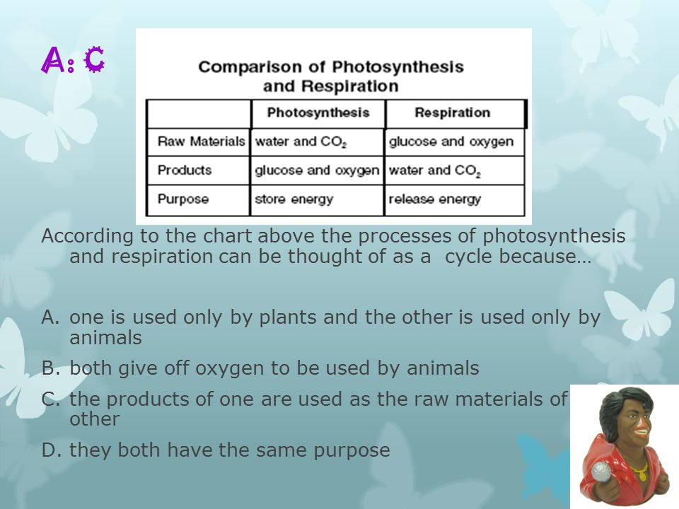A: C According to the chart above the processes of photosynthesis and respiration can be thought of as a cycle because… A.one is used only by plants and the other is used only by animals B.both give off oxygen to be used by animals C.the products of one are used as the raw materials of the other D.they both have the same purpose