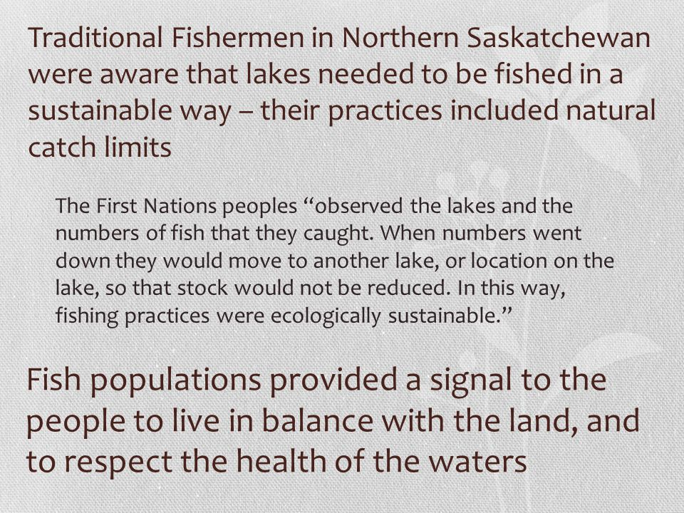 Traditional Fishermen in Northern Saskatchewan were aware that lakes needed to be fished in a sustainable way – their practices included natural catch limits The First Nations peoples observed the lakes and the numbers of fish that they caught.