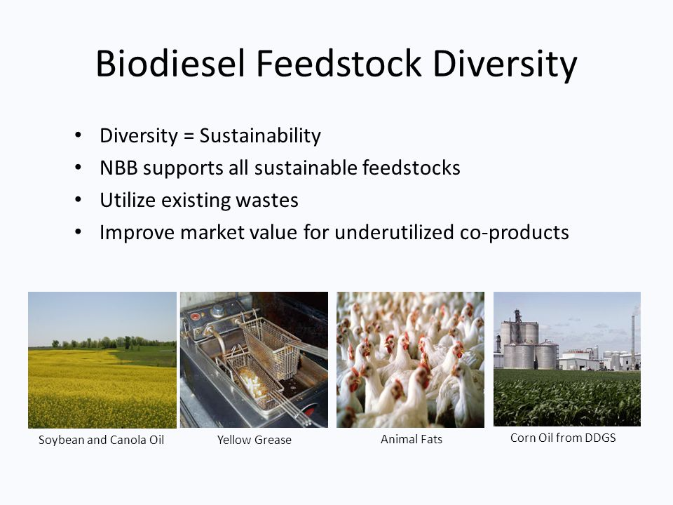 Biodiesel Feedstock Diversity Diversity = Sustainability NBB supports all sustainable feedstocks Utilize existing wastes Improve market value for unde