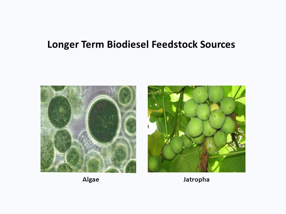 Longer Term Biodiesel Feedstock Sources Algae Jatropha