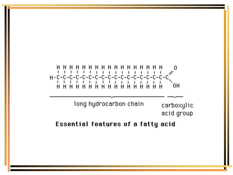 Fatty Acid Molecular Structure