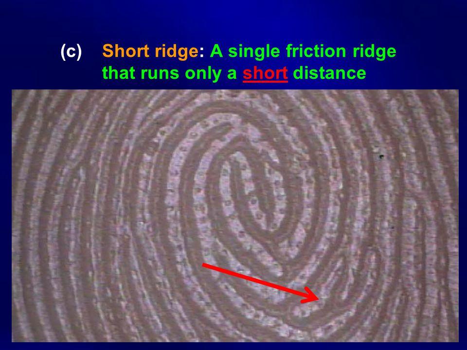 (c) Short ridge: A single friction ridge that runs only a short distance