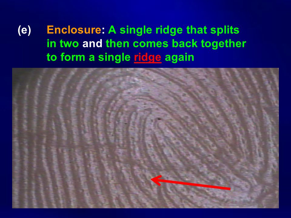 (e) Enclosure: A single ridge that splits in two and then comes back together to form a single ridge again