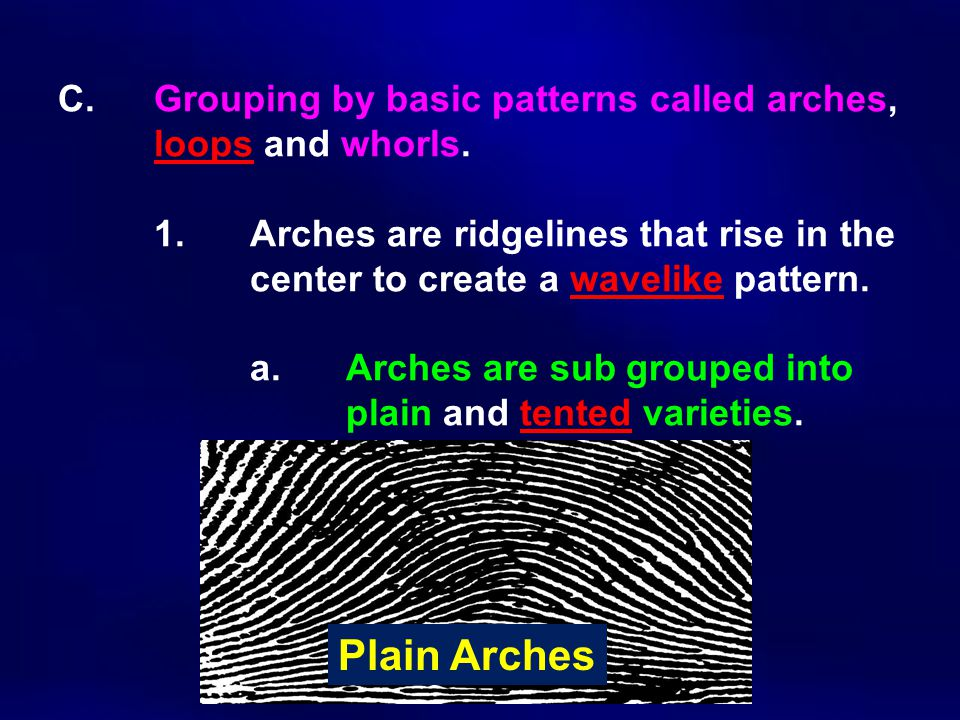 C. Grouping by basic patterns called arches, loops and whorls. 1. Arches are ridgelines that rise in the center to create a wavelike pattern. a. Arche