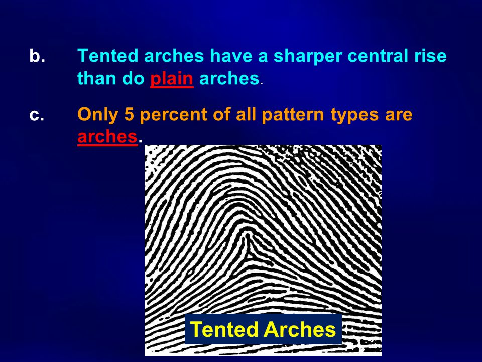 b. Tented arches have a sharper central rise than do plain arches. c. Only 5 percent of all pattern types are arches. Tented Arches