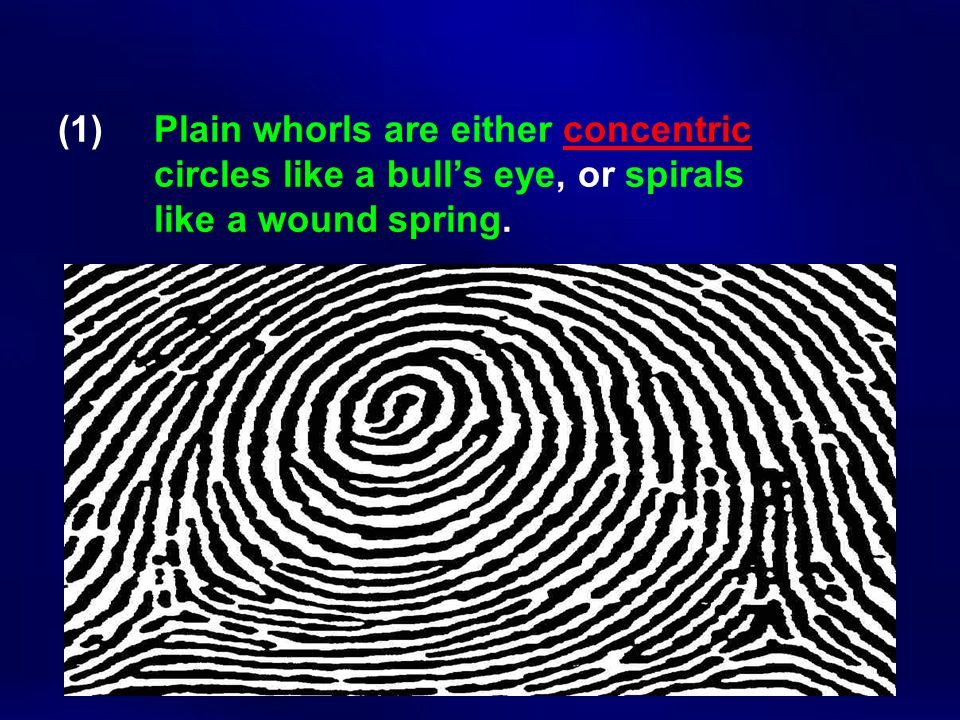 (1) Plain whorls are either concentric circles like a bull's eye, or spirals like a wound spring.
