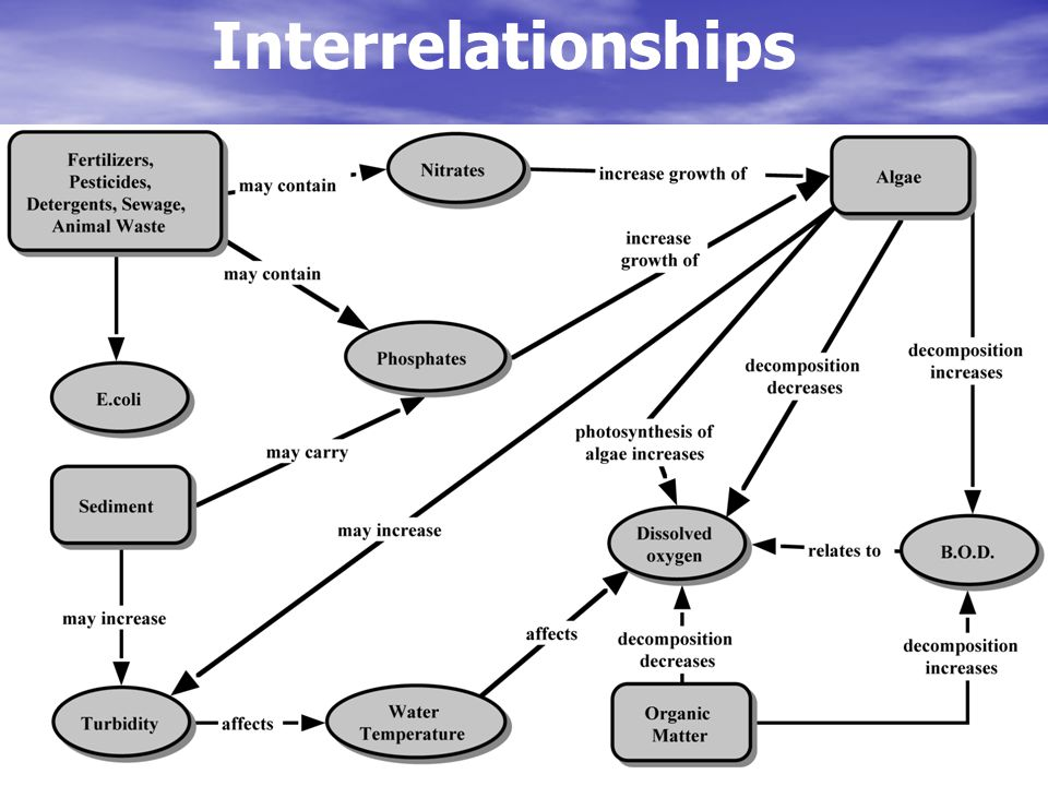 Interrelationships