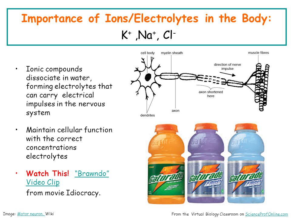 Importance of Ions/Electrolytes in the Body: K +,Na +, Cl - Ionic compounds dissociate in water, forming electrolytes that can carry electrical impulses in the nervous system Maintain cellular function with the correct concentrations electrolytes Watch This.