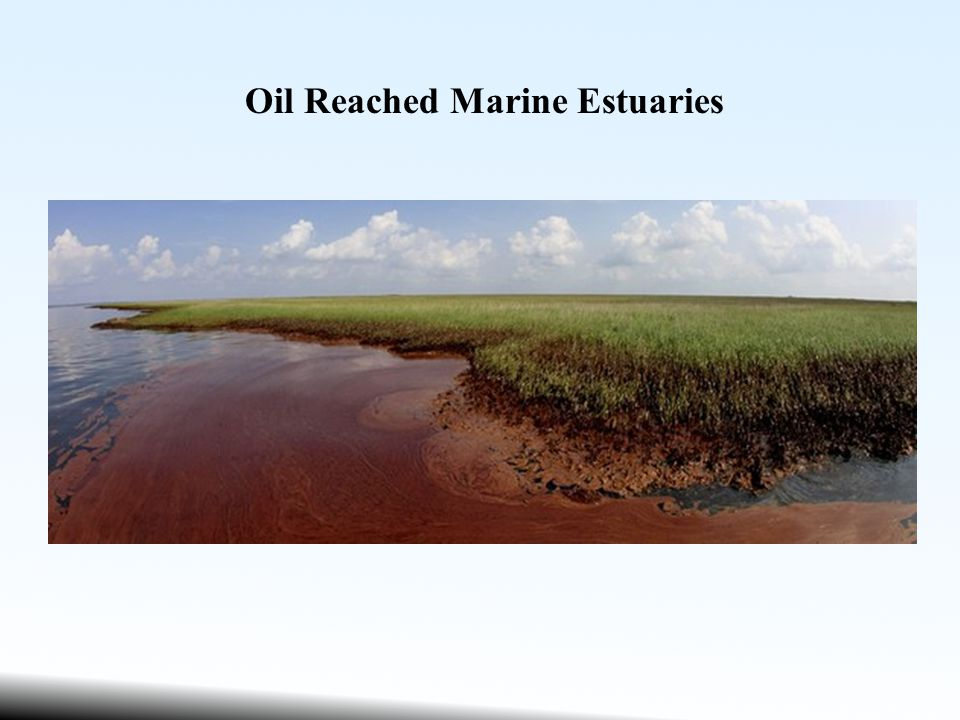 Oil Reached Marine Estuaries
