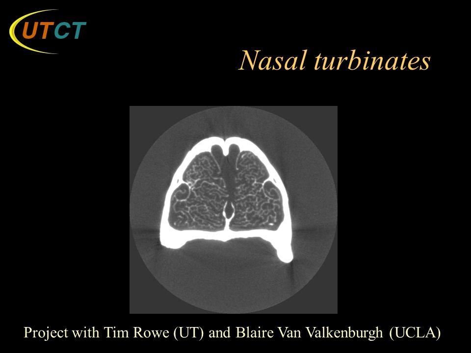 Nasal turbinates Project with Tim Rowe (UT) and Blaire Van Valkenburgh (UCLA)