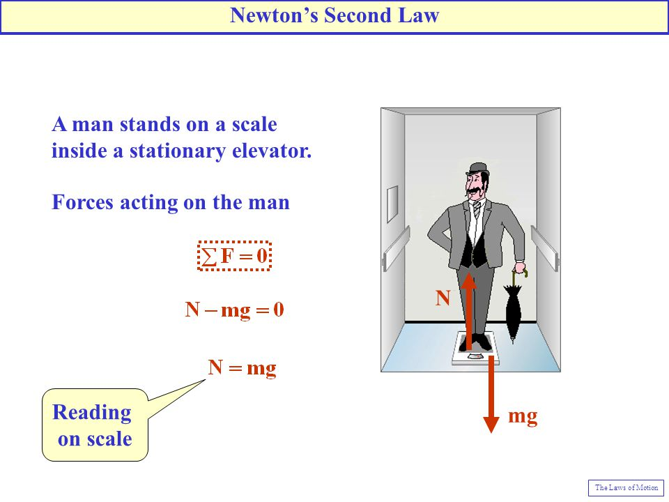 A man stands on a scale inside a stationary elevator. N mg Forces acting on the man Reading on scale Newton's Second Law The Laws of Motion