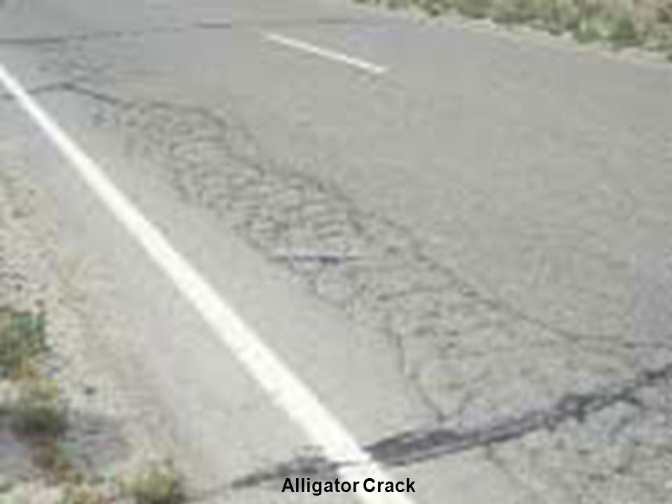 20 Alligator Crack