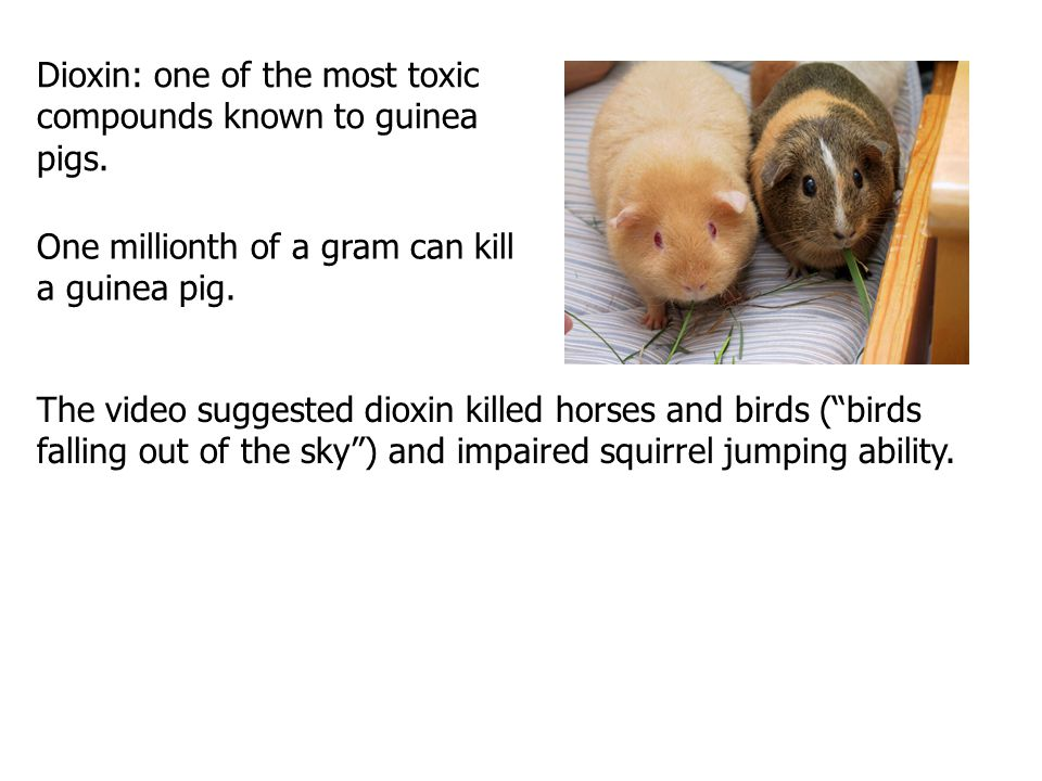 Dioxin: one of the most toxic compounds known to guinea pigs.