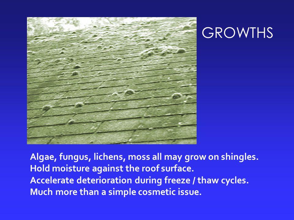 GROWTHS Algae, fungus, lichens, moss all may grow on shingles.
