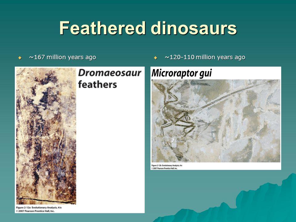 Feathered dinosaurs  ~167 million years ago  ~120-110 million years ago