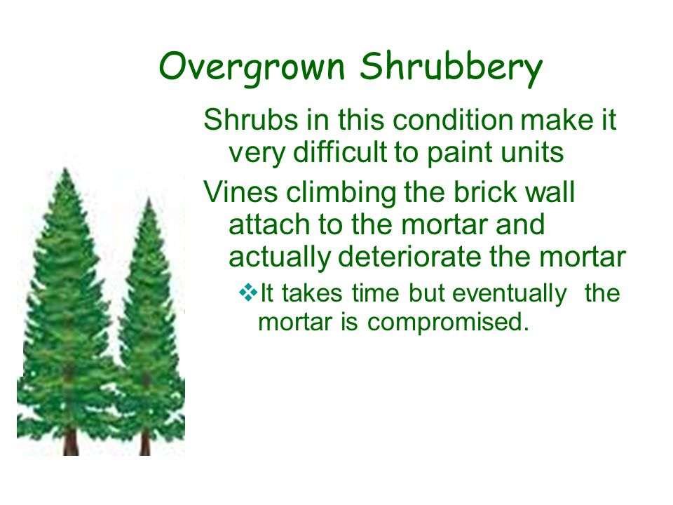 Shrubs in this condition make it very difficult to paint units Vines climbing the brick wall attach to the mortar and actually deteriorate the mortar  It takes time but eventually the mortar is compromised..