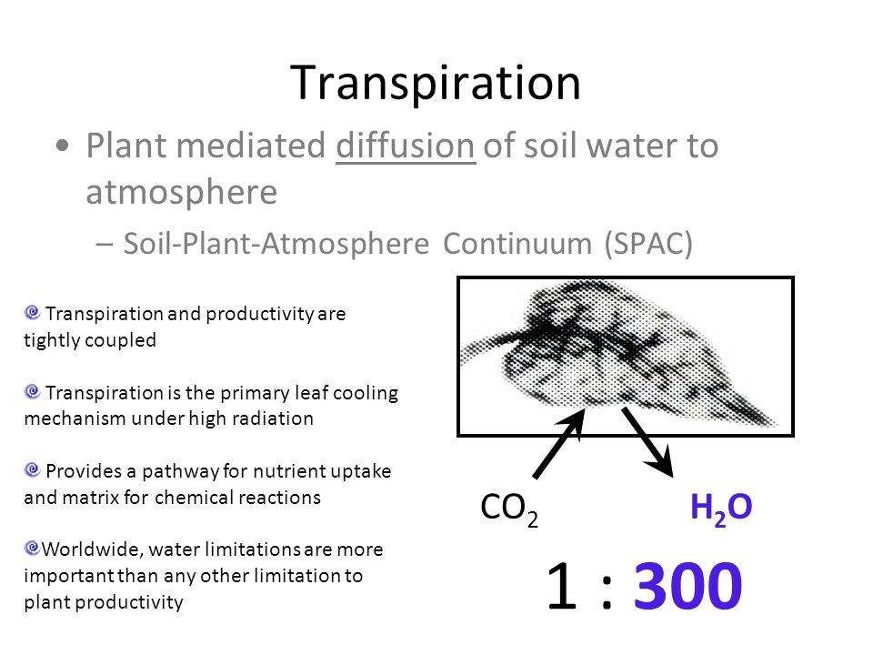 Transpiration Plant mediated diffusion of soil water to atmosphere –Soil-Plant-Atmosphere Continuum (SPAC) CO 2 H2OH2O 1 : 300 Transpiration and produ