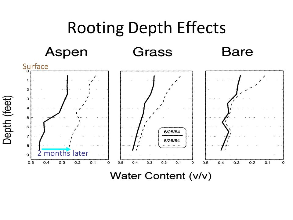 Surface 2 months later Rooting Depth Effects