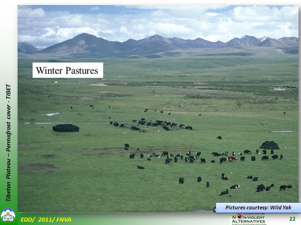 EDD/ 2011/ FNVA Tibetan Plateau – Permafrost cover - TIBET 22 Pictures courtesy: Wild Yak Winter Pastures