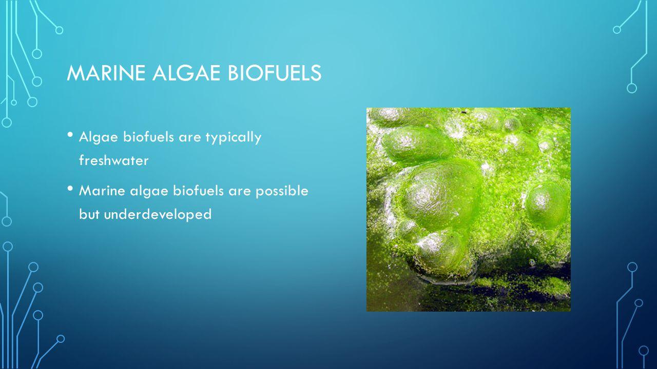 MARINE ALGAE BIOFUELS Algae biofuels are typically freshwater Marine algae biofuels are possible but underdeveloped