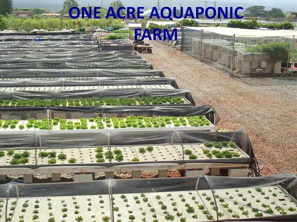 ONE ACRE AQUAPONIC FARM
