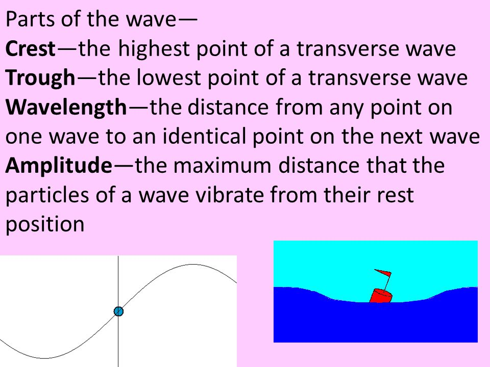 Parts of the wave— Crest—the highest point of a transverse wave Trough—the lowest point of a transverse wave Wavelength—the distance from any point on