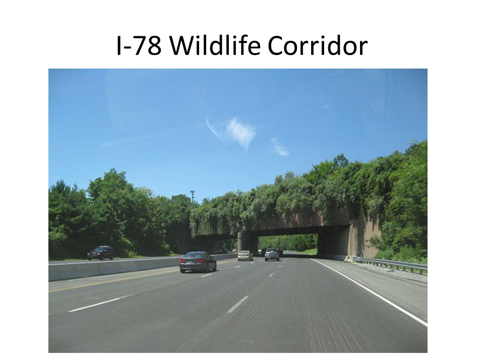 I-78 Wildlife Corridor
