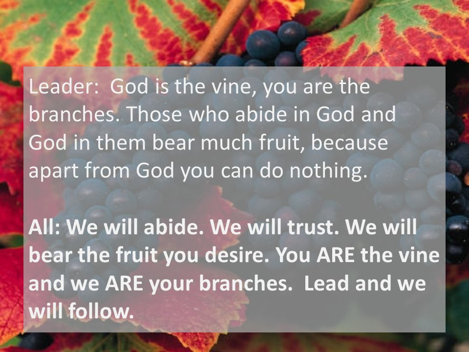 Leader: God is the vine, you are the branches.
