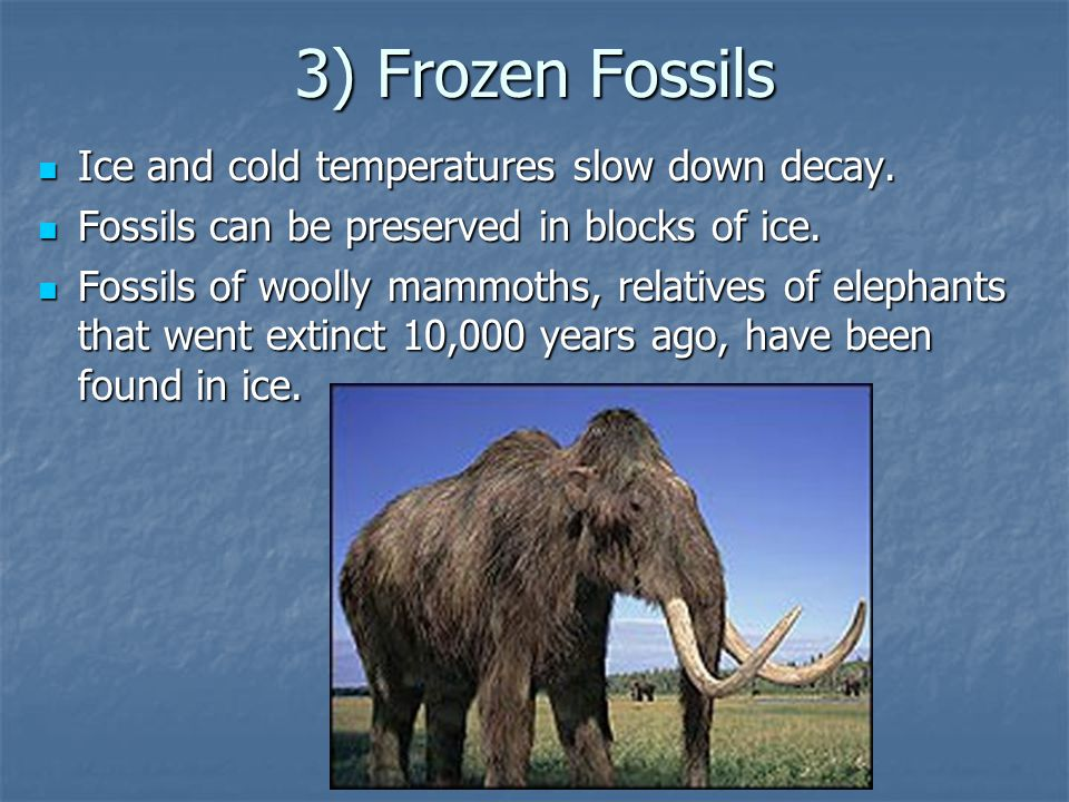 3) Frozen Fossils Ice and cold temperatures slow down decay.