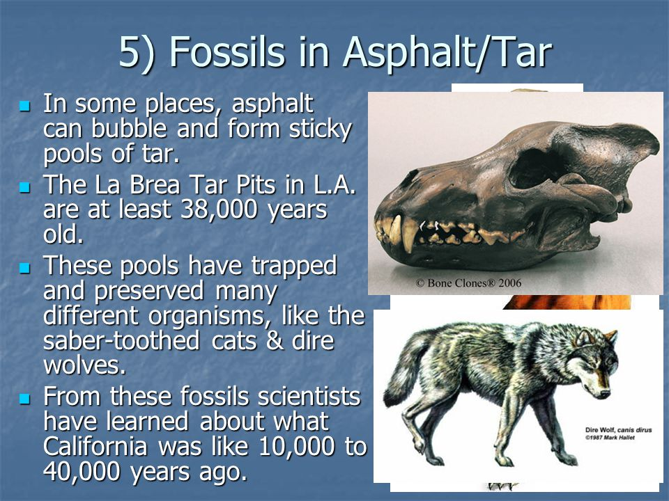 5) Fossils in Asphalt/Tar In some places, asphalt can bubble and form sticky pools of tar.