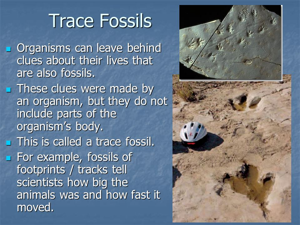 Trace Fossils Organisms can leave behind clues about their lives that are also fossils. Organisms can leave behind clues about their lives that are al