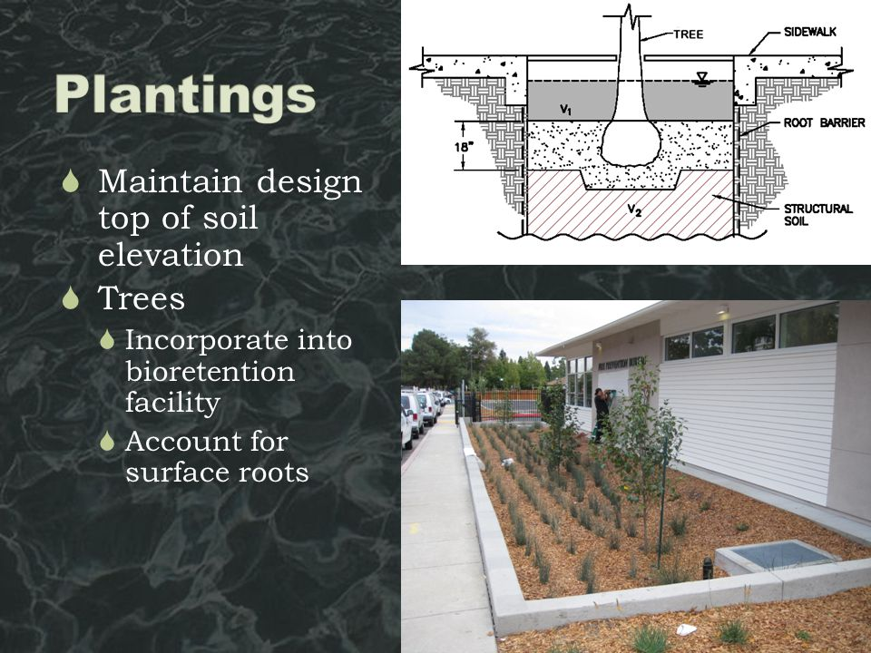  Maintain design top of soil elevation  Trees  Incorporate into bioretention facility  Account for surface roots