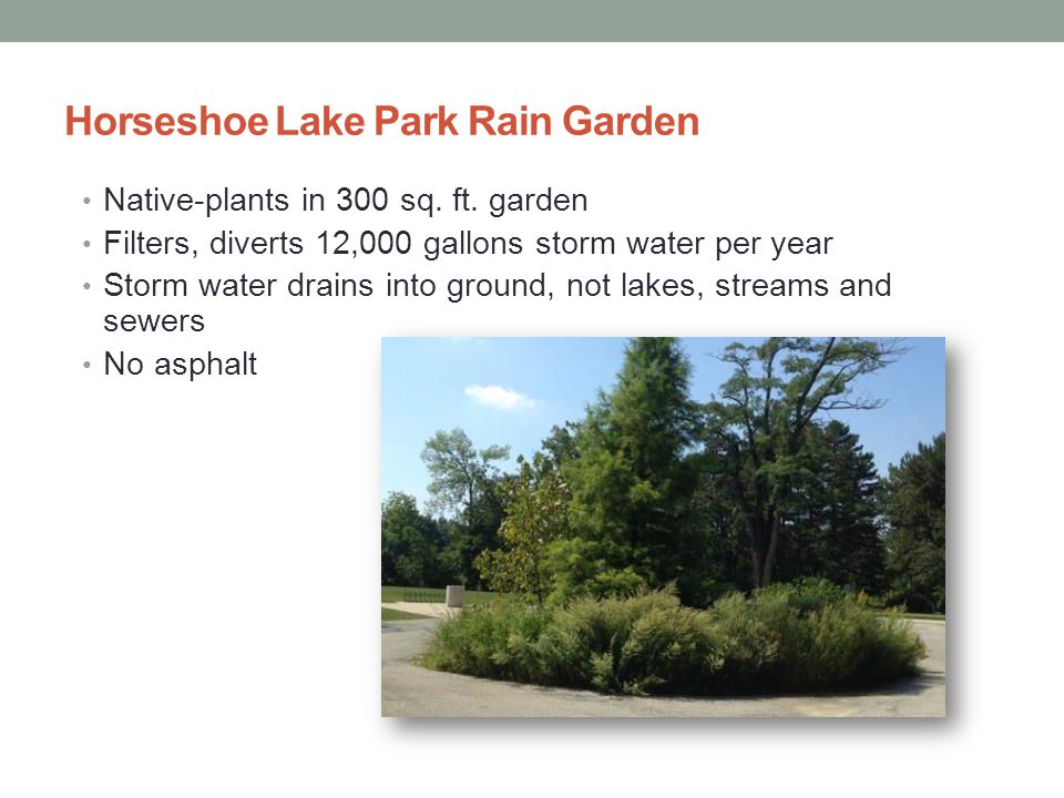 Horseshoe Lake Park Rain Garden Native-plants in 300 sq.