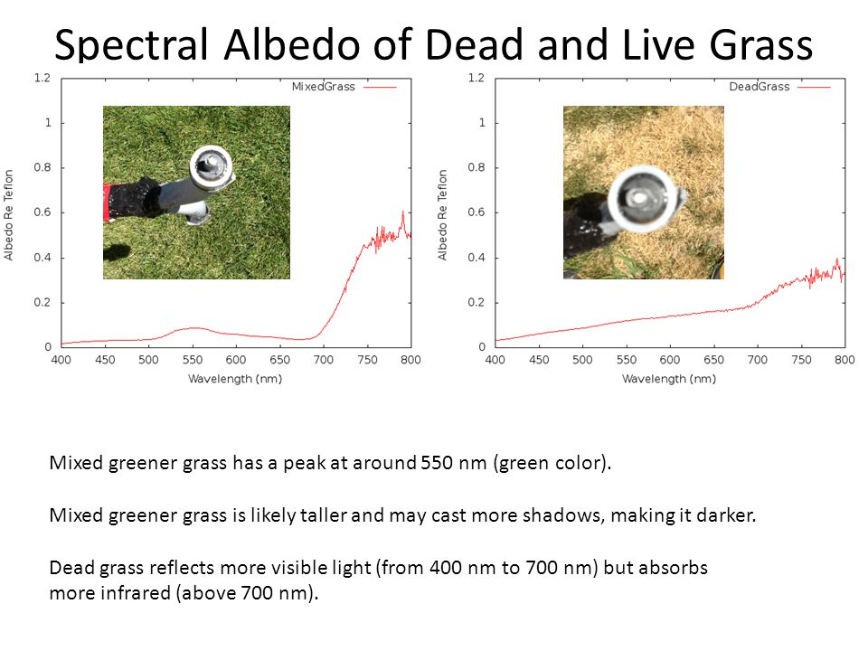 Spectral Albedo of Dead and Live Grass Mixed greener grass has a peak at around 550 nm (green color).