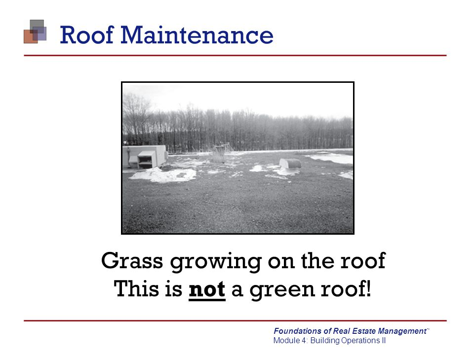 Foundations of Real Estate Management Module 4: Building Operations II TM Roof Maintenance Grass growing on the roof This is not a green roof!