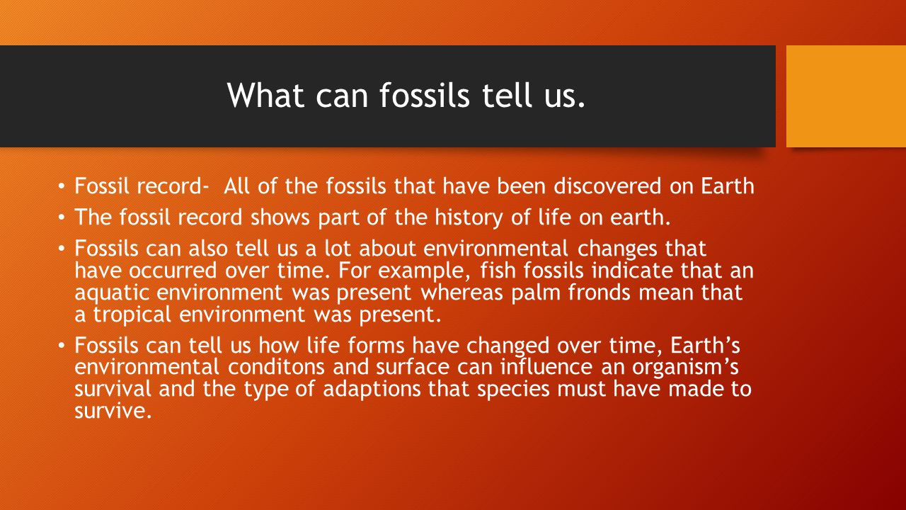What can fossils tell us.