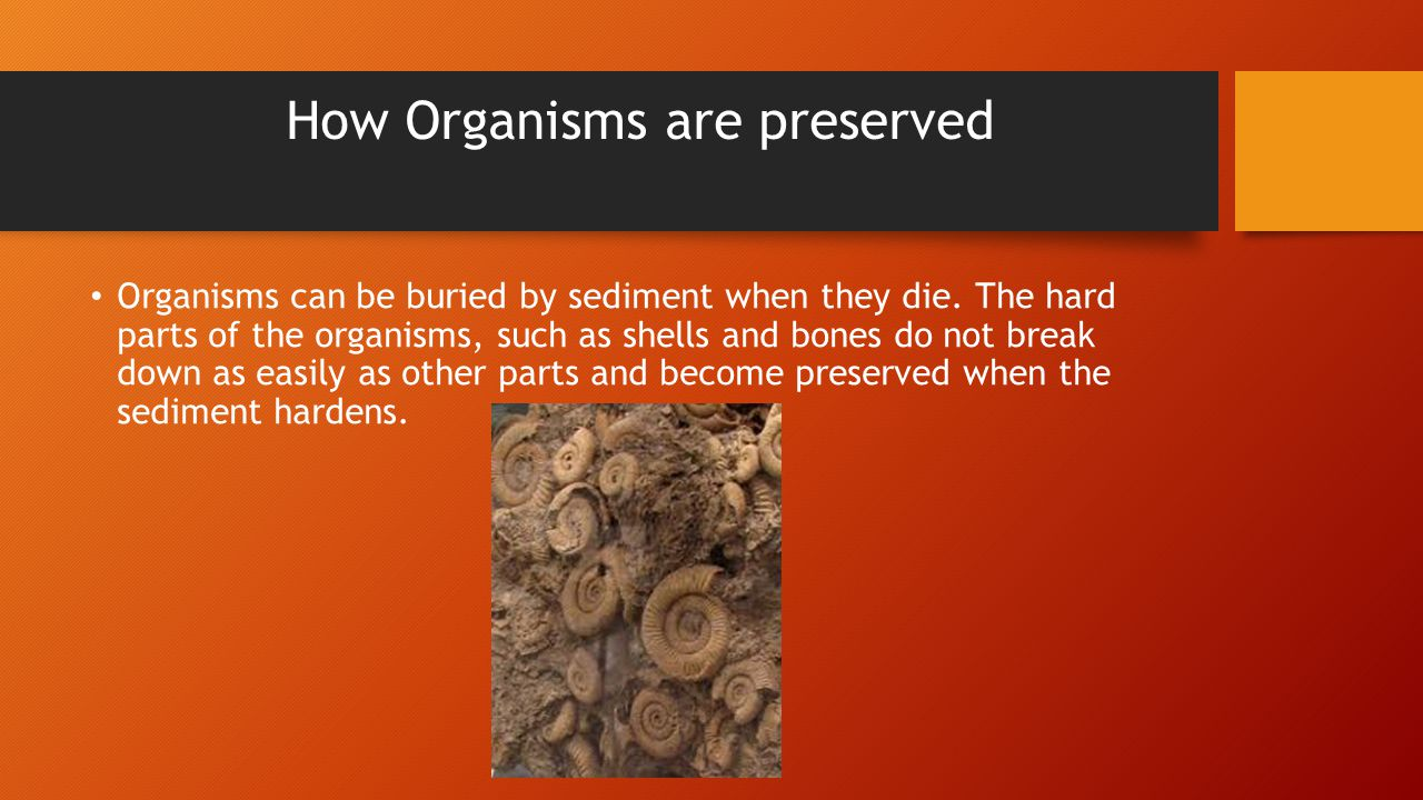 Organisms can be buried by sediment when they die.