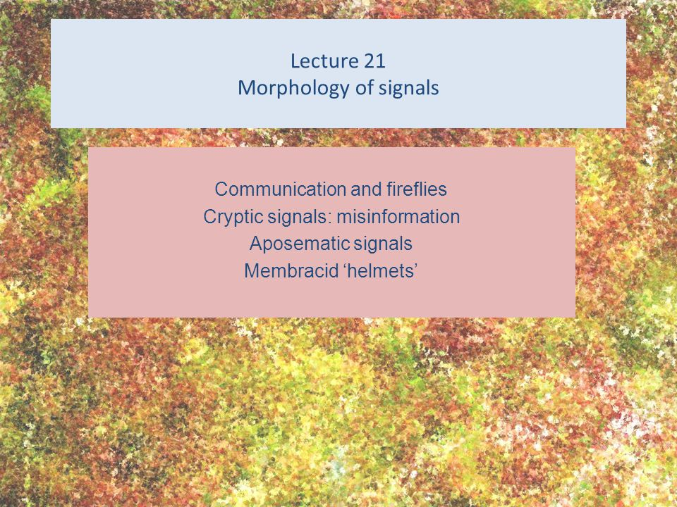 Lecture 21 Morphology of signals Communication and fireflies Cryptic signals: misinformation Aposematic signals Membracid 'helmets'