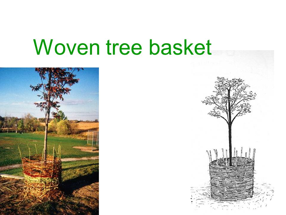 Woven tree basket