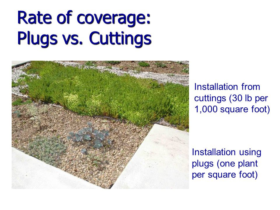 Rate of coverage: Plugs vs.