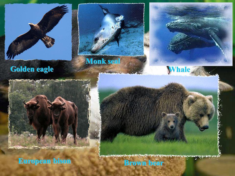 Golden eagle Whale European bison Monk seal Brown bear