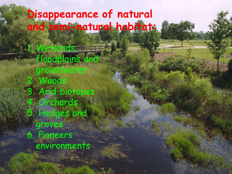 Disappearance of natural and semi-natural habitat: 1.Wetlands, floodplains and groundwater 2.