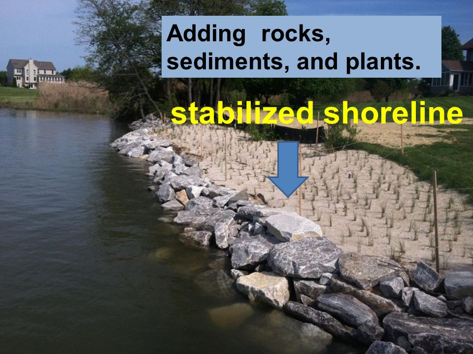 stabilized shoreline Adding rocks, sediments, and plants.