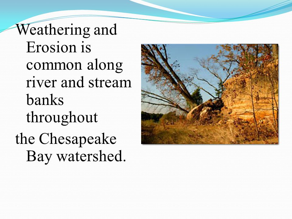 Weathering and Erosion is common along river and stream banks throughout the Chesapeake Bay watershed.