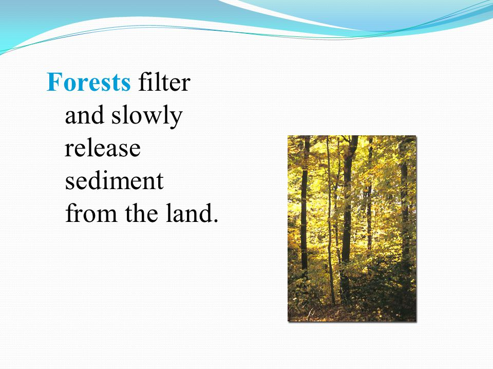 Forests filter and slowly release sediment from the land.
