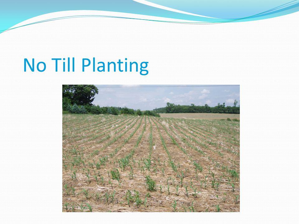 No Till Planting