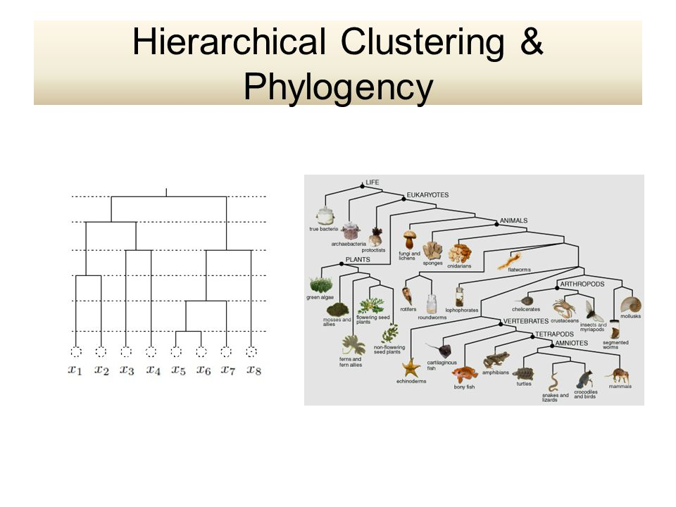 Ph ylogeny is an application of Hierarchical Clustering.