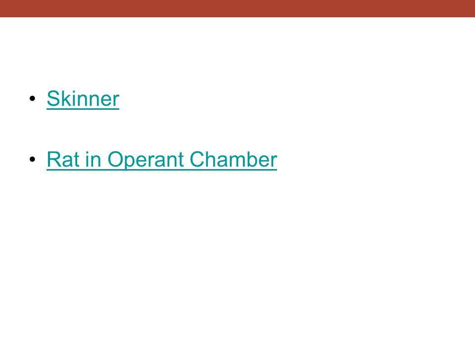 Skinner Rat in Operant Chamber