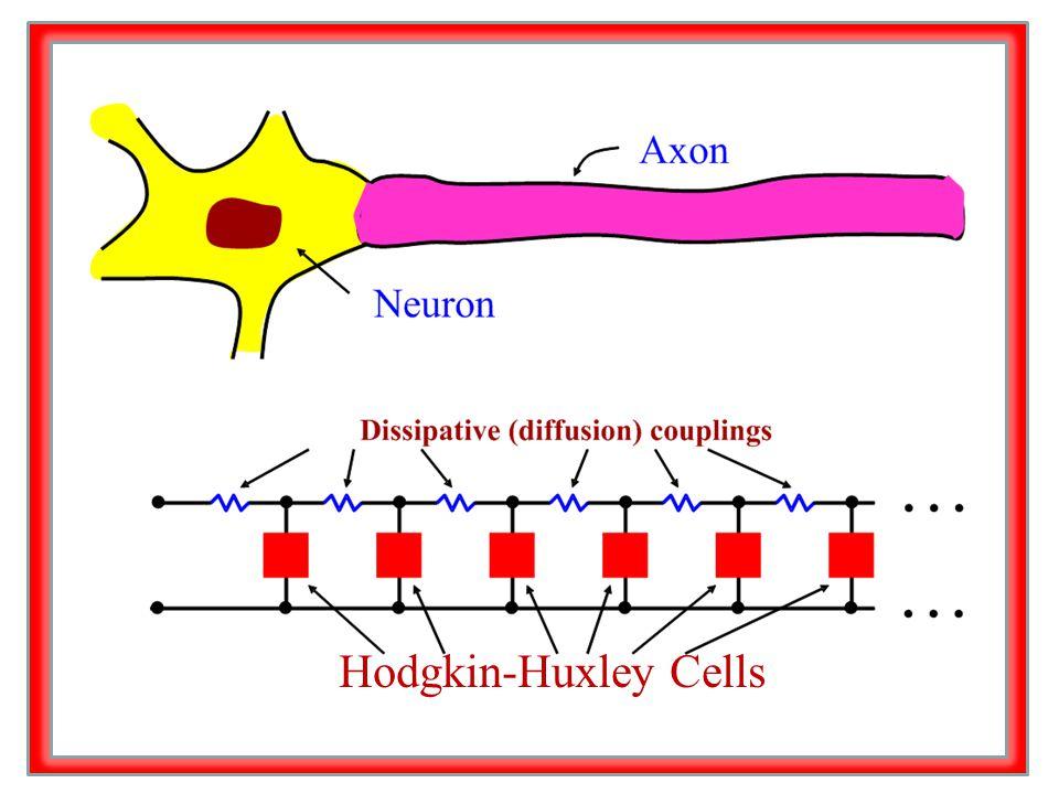 Hodgkin-Huxley Cells