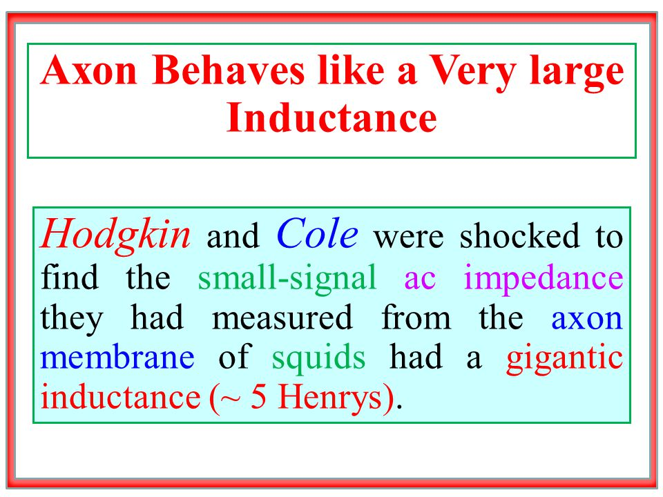 Axon Behaves like a Very large Inductance Hodgkin and Cole were shocked to find the small-signal ac impedance they had measured from the axon membrane